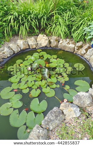 Pond in garden with water lilies - stock photo