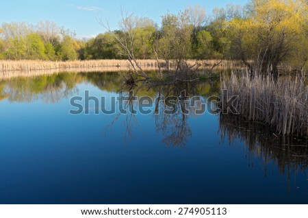 Pond marshes forest and reflections on water at nature center in west saint paul  - stock photo