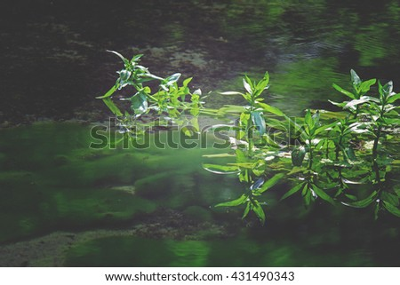 Pond plants and reflection in water - stock photo