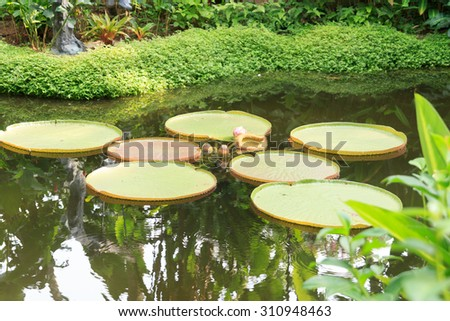 Pond with water lilies and palm trees in Singapore Botanic Gardens - stock photo