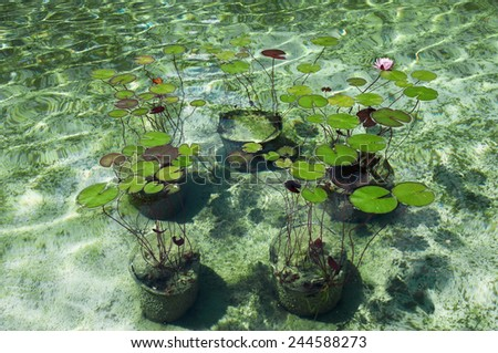 Pond with water lilies in a pond park  - stock photo