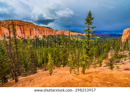Ponderosa Pine Trees Bryce Canyon National Park - stock photo