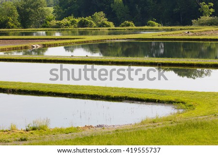 Ponds at a fish hatchery in Clinton, Tennessee - stock photo