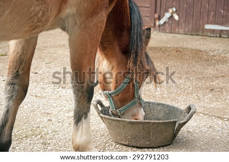 Pony eating from a rubber feed skip - stock photo
