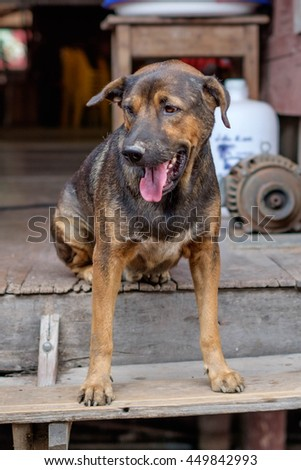 Poor dog  at the temple. - stock photo