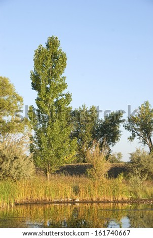 Poplar stands by a pond on the Colorado Prairie bathed in golden light - stock photo