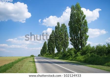 Poplar trees by the empty road - stock photo