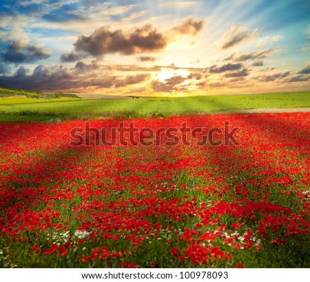 Poppies field and meadows under sunset sunbeams - stock photo