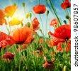 poppies field in rays sun - stock photo