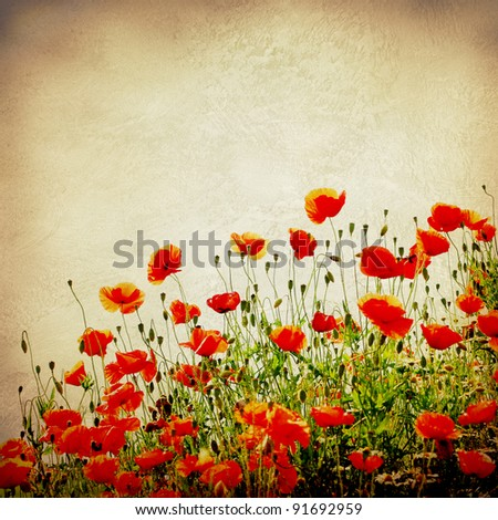 poppies on a grunge background - stock photo