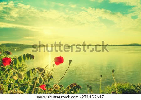 Poppies on the Danube bank. Danube is a European river, the European Union's longest and the continent's second longest. - stock photo