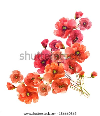 Poppies . Watercolor. - stock photo