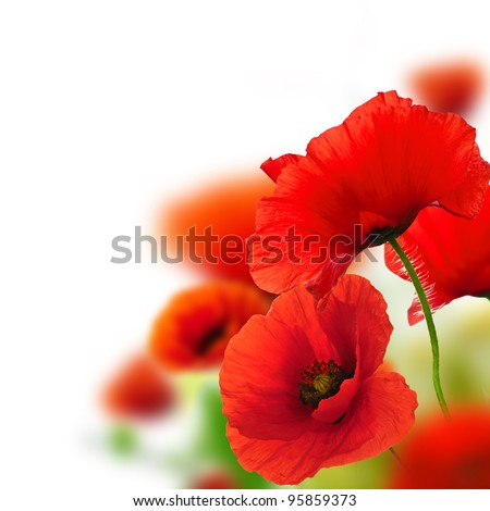 poppies white background, green and red floral design, frame - stock photo