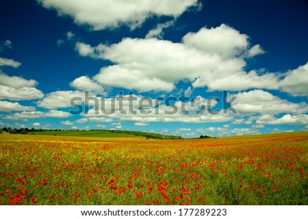 Poppy and rape field with cloud landscape - stock photo