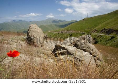 Poppy flower in background mountain route - Armenia - stock photo