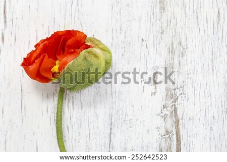 Poppy flower on wooden background, copy space - stock photo
