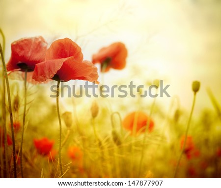 Poppy flowers in the sky  - stock photo
