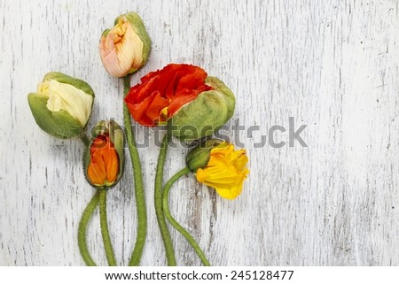 Poppy flowers on wooden background, copy space - stock photo