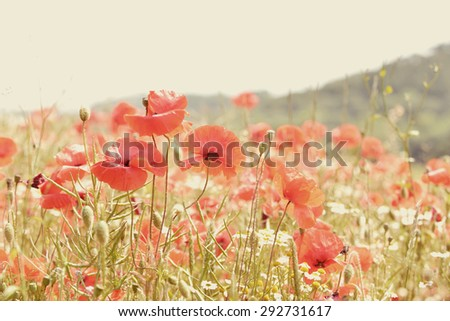 Poppy meadow with instagram style filter. - stock photo