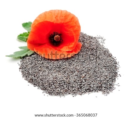 Poppy seed with poppy flowers close up on white - stock photo