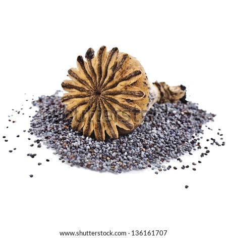 poppy seeds and poppy head top view isolated on white background - stock photo