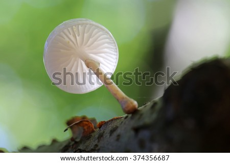 porcelain fungus - stock photo