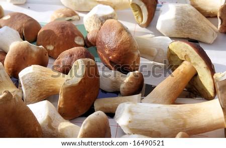porcini - stock photo