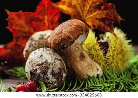 porcini mushroom - stock photo