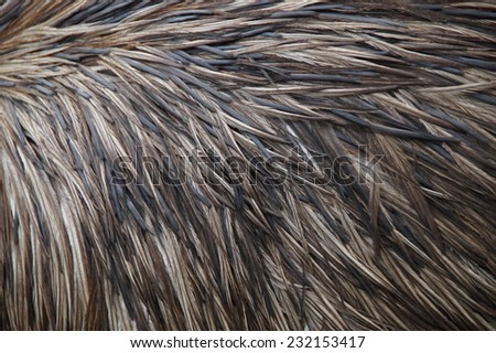 Porcupine body with spines - skin background - stock photo