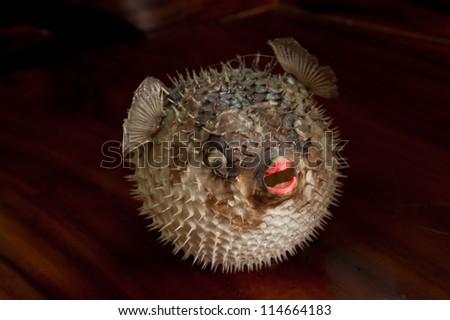 Porcupine fish at Pattaya street market.Thailand - stock photo
