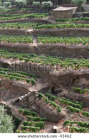 Port Wine Vineyards, Portugal - stock photo