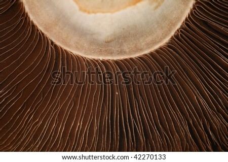 Portabella mushrooms. Close-up. - stock photo