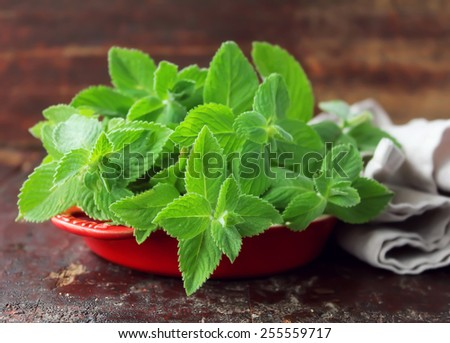 Portion of fresh Mint, selective focus - stock photo