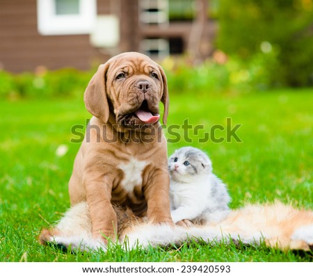 Portrait Bordeaux puppy dog and newborn kitten sitting together on green grass - stock photo