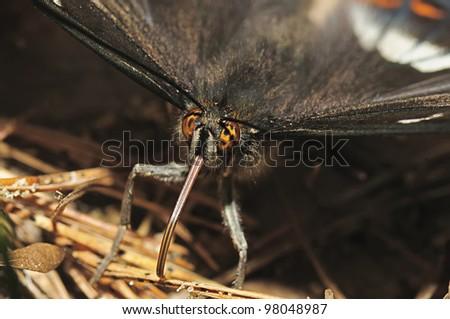 portrait butterfly - stock photo