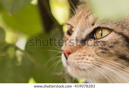 Portrait close up of cat's eyes staring, sitting under a tree. - stock photo