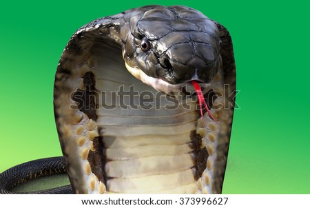 Portrait 3d King cobra snake isolated on green background - stock photo