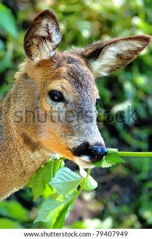 Portrait deer - stock photo