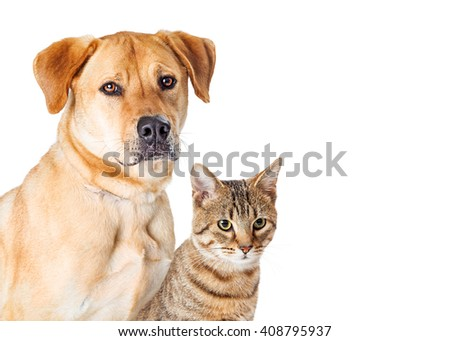 Portrait Dog and Cat With Copy Space - stock photo