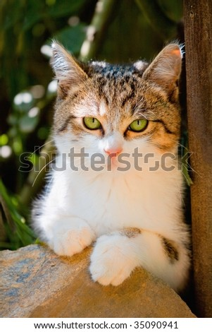 Portrait little cat with green eyes - stock photo