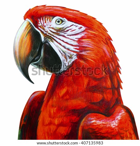 Portrait macaw red drawing. Ara chloropterus. Red-and-green macaw drawing. Colored pencil drawing Ara red. Classic drawing Ara red. Detailed drawing Ara red. - stock photo
