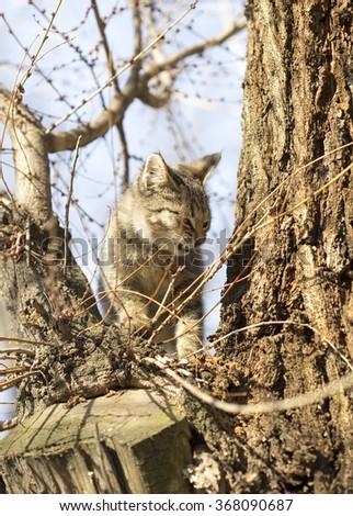 Portrait of a beautiful cat  - stock photo