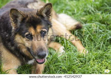Portrait of a beautiful dog on the grass - stock photo