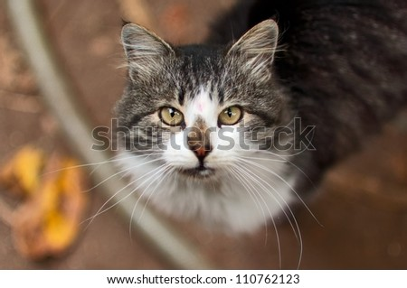 Portrait of a beautiful rural cat, close up. - stock photo