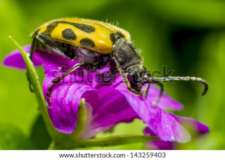 Portrait of a beetle - stock photo