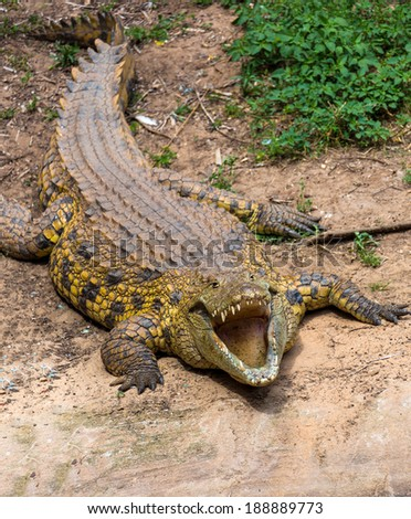 portrait of a big crocodile with mouth open - stock photo