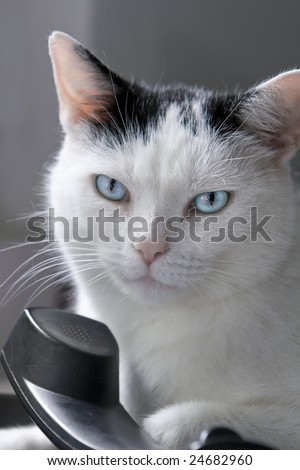Portrait of a black and white male cat, lying on a land-line phone. Shallow DOF. Could serve as a concept for communication. - stock photo