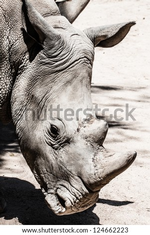Portrait of a black (hooked-lipped) rhinoceros (Diceros bicornis), South Africa ( HDR image ) - stock photo
