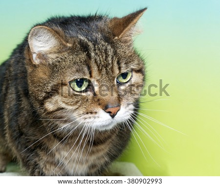 Portrait of a brown black and white tabby cat with green eyes looking to the side on a blue and yellow green textured background. Copy space - stock photo