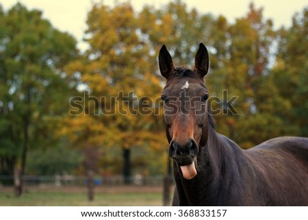 Portrait of a brown horse - stock photo